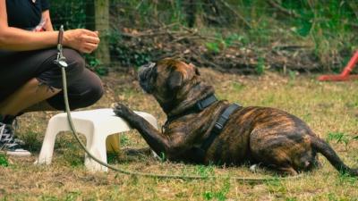 Hundeschule LanDog